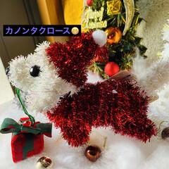 トイプー/トイプードル/犬/プレゼント/シクラメン/カノンタクロース/... おはようございます٩(*´꒳`*)۶ 今…(5枚目)