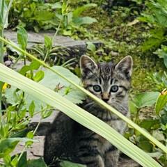 キジトラ/赤ちゃん/野良猫 こんばんわ🌙*.。  野良クロちゃんの赤…(6枚目)