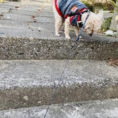 キズ/階段/野良猫/野良クロちゃん/猫/犬/... こんにちはヽ(^0^)ノ  華音散歩🐾 …(9枚目)
