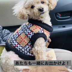 診察/犬/待機/トイプードル/トイプー/華音/... おはようございます🤗 暖かい朝です😆 日…
