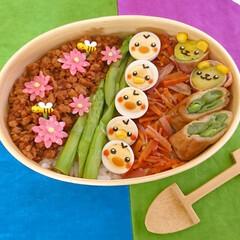 曲げわっぱ/わっぱ弁当/キャラ弁/ひよこ/うずらの卵/のっけ弁/... 今日のお弁当 「そぼろピヨピヨ整列弁当」…