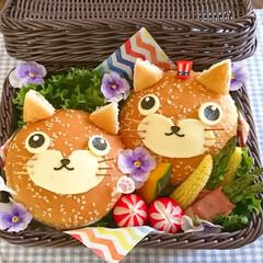 おうちカフェ/パン/可愛い/コストコ購入品/キャラ弁/ねこ/... こんにちは(^^) 今日のランチボックス…