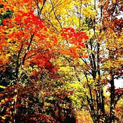 紅葉/秋 DIYじゃないけど 秋らしい写真をどうぞ…