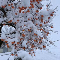 大雪/エイハウス/雪国秋田/住まい/暮らし/フォロー大歓迎 一気に真冬です⛄️