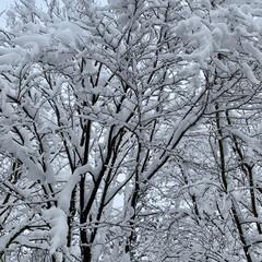 ホワイトアウト/雪国秋田 3日連続道路脇に落ちた車をお見かけしまし…