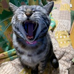 秋田県大仙市/エイハウス/猫のいる暮らし/フォロー大歓迎 あけましての 『あ』 我が家に来て2度目…