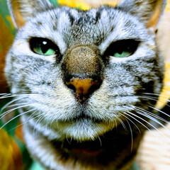 猫のいる暮らし/チャトコ 今日お客様に抱っこしていただき、グリーン…