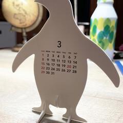 アニマル雑貨/ペンギン/カレンダー 3月がやってきます 🐧🐧🐧🐧🐧🐧 卒業式…