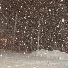 ホワイトアウト 一気に真冬になりました☃️ 明日は最高気…