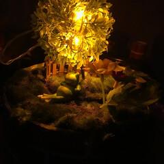 我が家の照明 帽子のてっぺんに芝生を敷き、そこに木が生…(1枚目)
