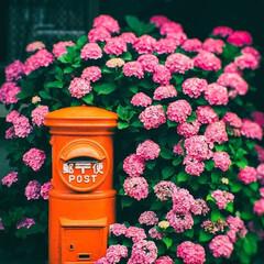 季節インテリア/梅雨便利グッズ/雨対策/梅雨対策/靴下ボックス/ソックス収納/... 紫陽花のポスト