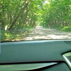 トンネル/新緑 車の中から🚙新緑のトンネルが続きました🌿…(1枚目)