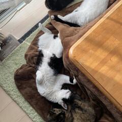 猫屋敷/保護猫/猫 みんなでお昼寝!