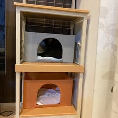 アニマルコミュニケーション/保護猫/完全室内飼育/猫屋敷/再利用/レンジ台 捨てられる運命だったレンジ台は ネコの遊…