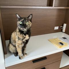 キッチンボード/完全室内飼育/猫屋敷/ねこ多頭飼い/ニトリ ニトリで買ったキッチンボードが届いた❣️…