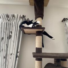 アニマルコミュニケーション/多発性嚢胞腎/保護猫/猫屋敷/完全室内飼育 よくこんなとこで寝られるなぁ(2枚目)