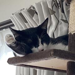 アニマルコミュニケーション/多発性嚢胞腎/保護猫/猫屋敷/完全室内飼育 よくこんなとこで寝られるなぁ