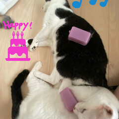 ラバーブラシ/ブラッシング/完全室内飼育/保護猫/猫屋敷 ブラッシングで幸せいっぱいなネコ