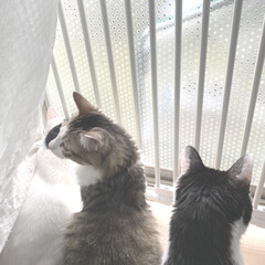 脱走防止対策/完全室内飼育/猫屋敷/ねこ多頭飼い 1枚目:新設した脱走防止フェンスを前に …