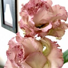 近所にて/素敵な花屋さん/花 昨日お迎えした リビングの花。 自宅から…(2枚目)