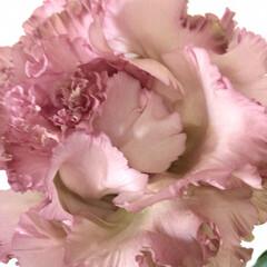 近所にて/素敵な花屋さん/花 昨日お迎えした リビングの花。 自宅から…(1枚目)
