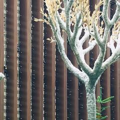 木/不思議な木/何の木? この木は、何の木? 不思議な形🌳 出先で…(2枚目)