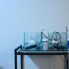 家/レイアウト/シンプル/ここが好き 私の家の好きなところは、飼っている亀の水…(1枚目)