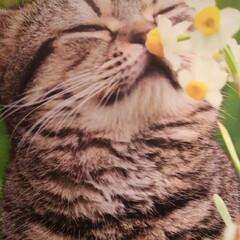 いいねTop10決定戦 お友達のお誘いでネコとじいちゃんの写真展…