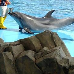 いいねTop10決定戦 名古屋港水族館のイルカショーです😊大好き…
