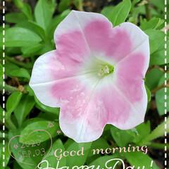 リミアのある暮らし/花のある生活/花のある暮らし/我が家の庭の花/ガーデニング/花 今日も素敵な一日になりますように(♥Ü♥…