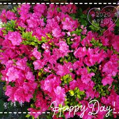 春/癒し/リミアのある暮らし/リミアな暮らし/庭の花/わが家の庭の花/... 今日も素敵な一日になりますように(♥Ü♥…