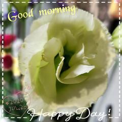 玄関の花/元気の源/花のある生活/花のある暮らし/リミアのある暮らし/フォロー大歓迎 今日も素敵な一日になりますように(♥Ü♥…