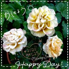 やすらぎ/花のパワー/元気の源/癒しの場所/癒しの空間/ガーデニング/... 今日も素敵な一日になりますように(♥Ü♥…