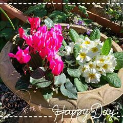 癒しの空間/ガーデニング好き/お花大好き/ガーデニング寄せ植え/ガーデニング/我が家の庭/... 今日も素敵な一日になりますように(♥Ü♥…