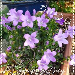 わが家の庭の花/鉢植え/ガーデニング/我が家の花/お花大好き/花のある暮らし/... 今日も素敵な一日になりますように(♥Ü♥…