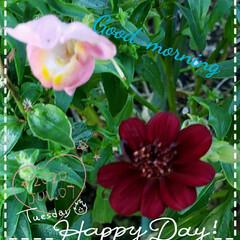 地植え/癒しの空間/癒しの場所/ガーデニング/花のある生活/花のパワー/... 今日も素敵な一日になりますように(♥Ü♥…
