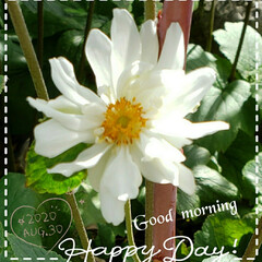 シュウメイギク/花好き/癒しの場所/癒しの空間/花のある生活/花のある暮らし/... 今日も素敵な一日になりますように(♥Ü♥…