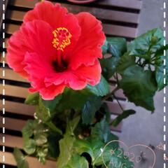 花好き/夏の花/癒しの場所/癒しの空間/花のパワー/元気の源/... 今日も素敵な一日になりますように(♥Ü♥…