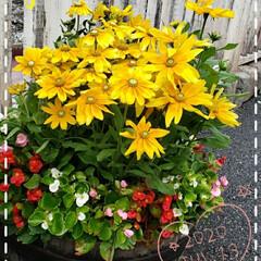 寄せ植え/ディズニーシー/お花大好き/花のある生活/花のある暮らし/リミアのある暮らし/... 今日も素敵な一日になりますように(♥Ü♥…