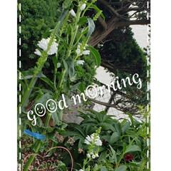 花虎の尾/ハナトラノオ/癒しの場所/癒しの空間/ガーデニング/地植え/... 今日も素敵な一日になりますように(♥Ü♥…