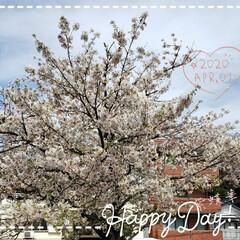頑張ろう/リミアな暮らし/春/フォロー大歓迎/新生活/暮らし 今日も素敵な一日になりますように(♥Ü♥…