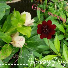 花のパワー/元気の源/ガーデニング/花のある生活/花のある暮らし/癒しの空間/... 今日も素敵な一日になりますように(♥Ü♥…