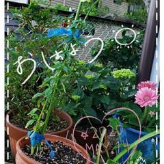 ガーデニング/癒しの空間/花のパワー/我が家の庭の花/庭の花たち/花のある暮らし/... 今日も素敵な一日になりますように(♥Ü♥…