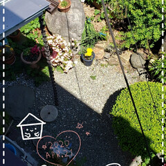 ビタミンカラー/黄色い花/心のゆとり/花のパワー/癒しの空間/ガーデニング好き/... 今日も素敵な一日になりますように(♥Ü♥…