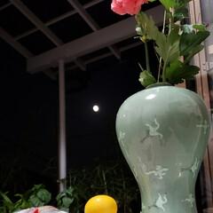 お月見団子/満月/中秋の名月/フォロー大歓迎/花/空 昨夜の🌃 中秋の名月🌕  お花とお月見団…