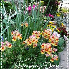 花のパワー/元気パワー/お花大好き/ガーデニング好き/ガーデニング/癒しの空間/... 今日も素敵な一日になりますように(♥Ü♥…