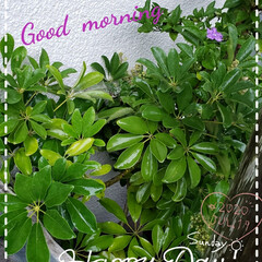 暮らし/住まい/元気の源/我が家の庭の花/庭の花たち/玄関の花/... 今日も素敵な一日になりますように(♥Ü♥…