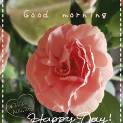 カーネーション/癒しの空間/癒しの場所/花のパワー/元気の源/玄関の花/... 今日も素敵な一日になりますように(♥Ü♥…