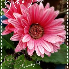 お花大好き/癒しの空間/元気パワー/庭の花/我が家の花/花のある暮らし/... 今日も素敵な一日になりますように(♥Ü♥…