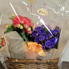 おもしろブーケマリン/ベゴニア/お花大好き/花のある生活/花のある暮らし/リンドウ/... 敬老の日に子供達が 祖父母にあげたお花た…(4枚目)